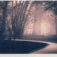 Gum-print-duotone-The-Path