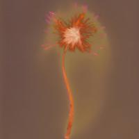 Lumen print, Dandelion