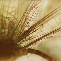 Gumprint-Neverthless-18