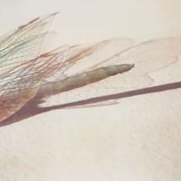 Gumprint-Winged-5