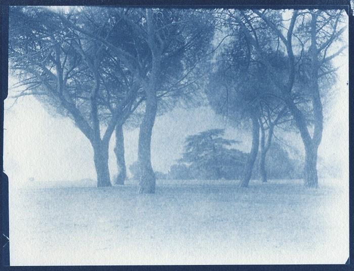 Cyanotype-Casa-de-Campo-Study-5