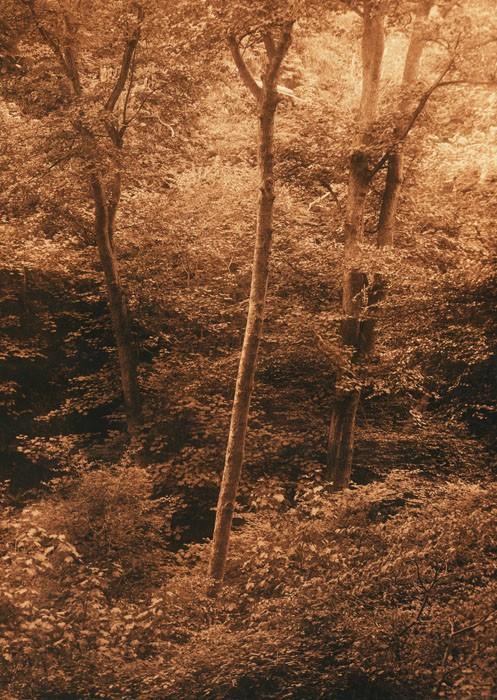 Lith-print-Blackford-Hill-Silver-Light