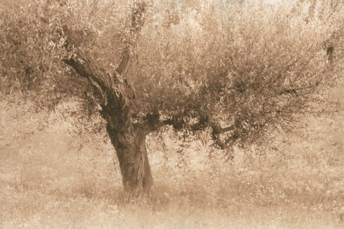 Lith-print-Via-Palma