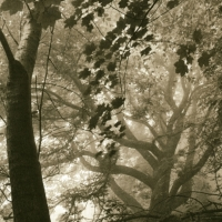 Lith print After the Bend - Mist