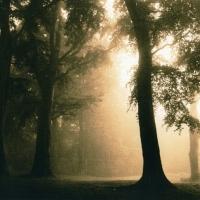 Lith print Clermiston Tower - Fog