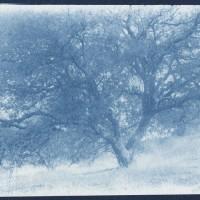 Cyanotype-Casa-de-Campo-Study-2