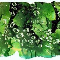 Polaroid emulsion lift dewdrops