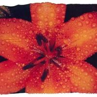 Polaroid emulsion lift floral 24