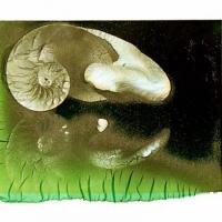 Polaroid emulsion lift nautilus