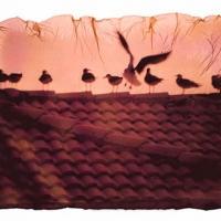 Polaroid emulsion lift rooftop birds