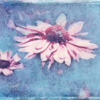 Polaroid image transfer pink flower 1