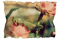 Polaroid emulsion lift grasshopper