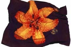 Polaroid emulsion lift tiger lily