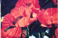 Polaroid image transfer red flowers 5
