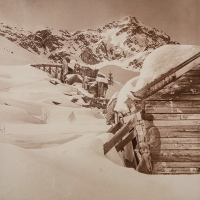 Vandyke brown Apparitions, Independence Mine, Talkeetna Mountains