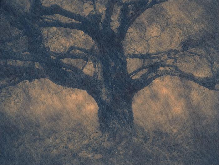 Cyanotype In-Times-Past