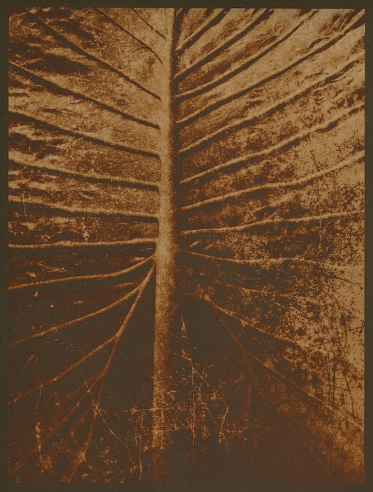 POP print Leaf