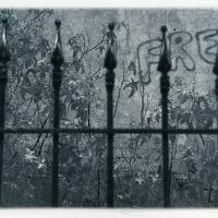 Cyanotype Free