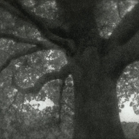 Bromoil Tree-8