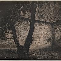 Daguerrotype Apple-Tree