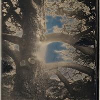 Daguerrotype Old-Yew