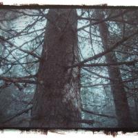 Vandyke brown Saarineva-Forest
