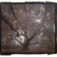 Vandyke brown The-Ahlstrom-Oak