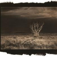 Vandyke brown Thundrestorm-Rising