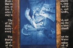 Pinhole Cyanotype Ossabaw Still Life