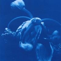 Cyanotype Giant Hogweed 1