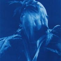 Cyanotype Giant Hogweed 3