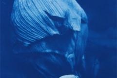 Cyanotype Giant Hogweed 4