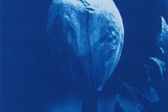 Cyanotype Giant Hogweed 5