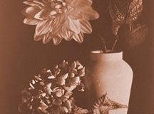 Kallitype Vandyke brown Stil 1