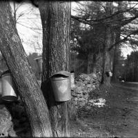 Dry plate Buckets