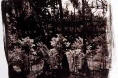 Kalllitype Miami plants