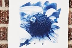 Cyanotype Untitled 4