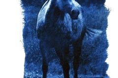 Cyanotype Toned Dark Blue Appaloosa Horse
