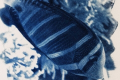 Cyanotype Untitled 8