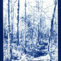 Cyanotype Spinney early spring