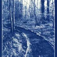 Cyanotype The spinney in autumn
