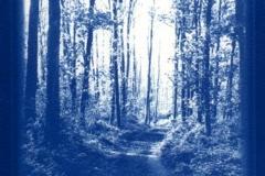 Cyanotype Crackley wood