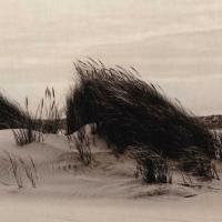 Lith print sand grass