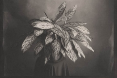 Platinum print Leaves