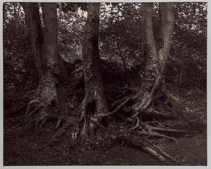 Kallitype-Threetree
