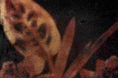 Kirlian photograph Dye Transfer Paper