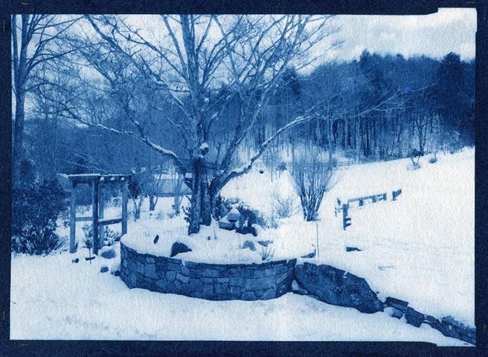 Cyanotype Dogwood