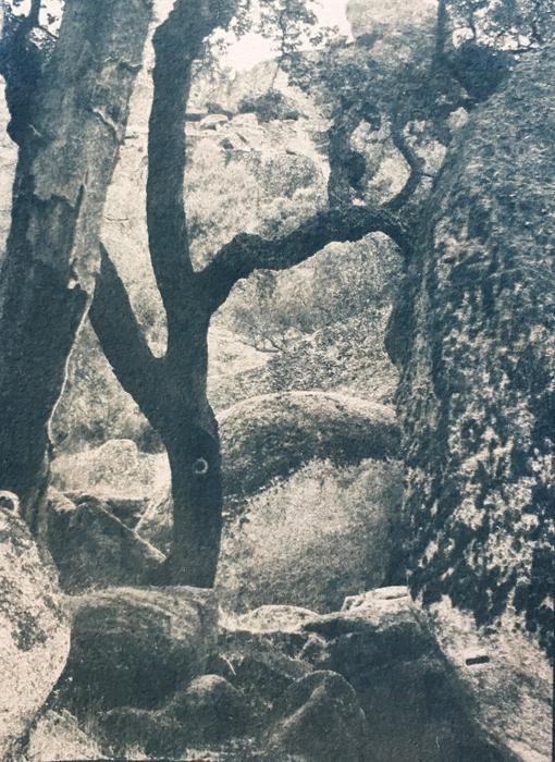 Cyanotype-Capuchos-tree