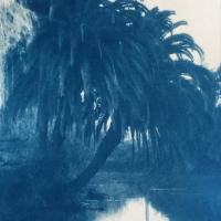 Cyanotype-Tomar-Palm