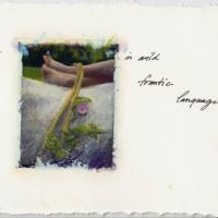 Polaroid image transfer Frantic language